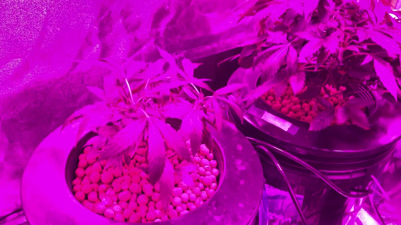 Dwc grow Update