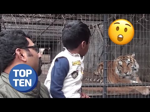 Top 10 Funny Animals Scaring People Moments