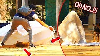 Blanket vs Prank Sleep Dog Very Funny - Must Watch Funny Video New Prank Dog Challenge 2021