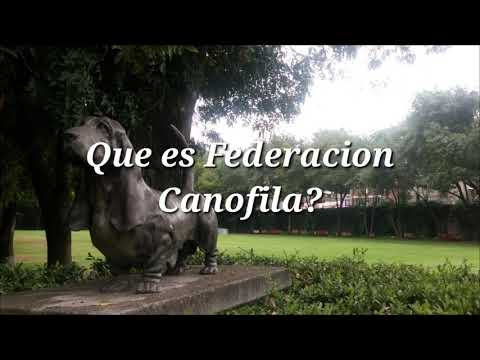 Tips Caninos, que