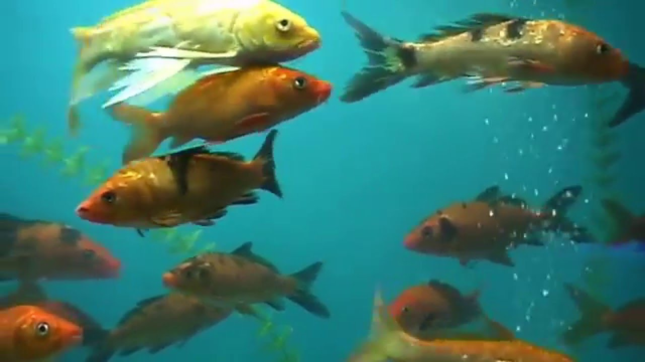 Fish aquarium in vadodara - Aquarium At Sayaji Park Vadodara Gujarat As On 05 04 2015 Youtube