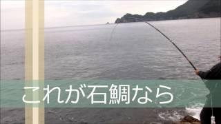 Repeat youtube video 石鯛釣り 外道 武者泊 タマミ78cm