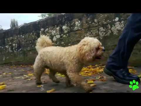 Holmes Chapel Dog Walking | Trailer