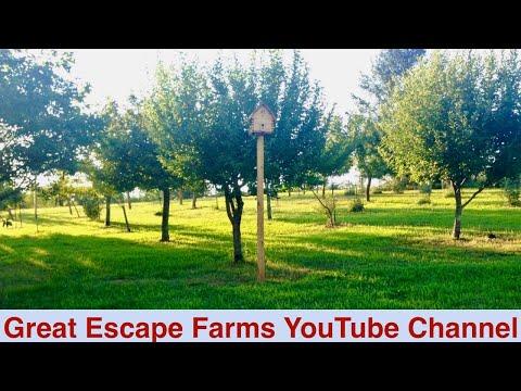 Great Escape Farms YouTube Channel
