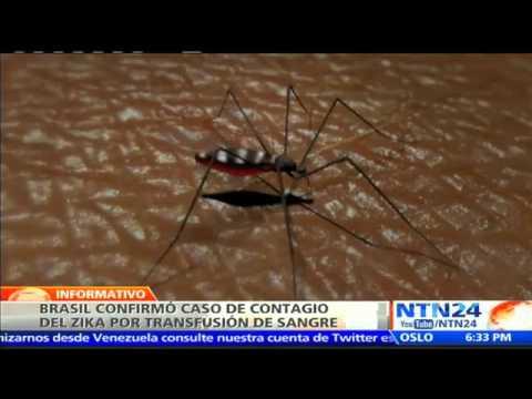 VIDEO: BRASIL CONFIRMAN EL PRIMER CASO DE CONTAGIO DEL ZIKA A TRAVÉS DE UNA TRANSFUSIÓN DE SANGRE