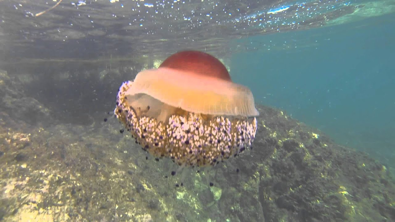будет пусть медузы в хорватии фото работы будет
