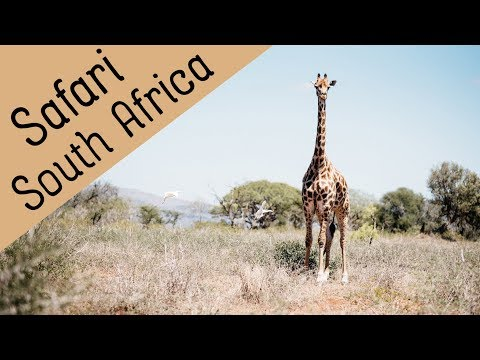 S01E04: Kruger National Park & Co ... Our first Safari in South Africa