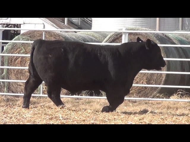 Express Ranches Lot 330