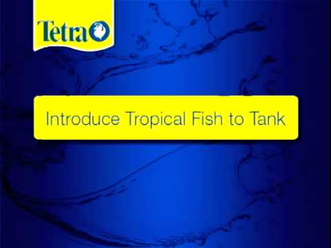 TetraCare for Tropical Fish