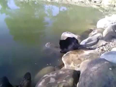 котик ловит рыбку скачать торрент - фото 4