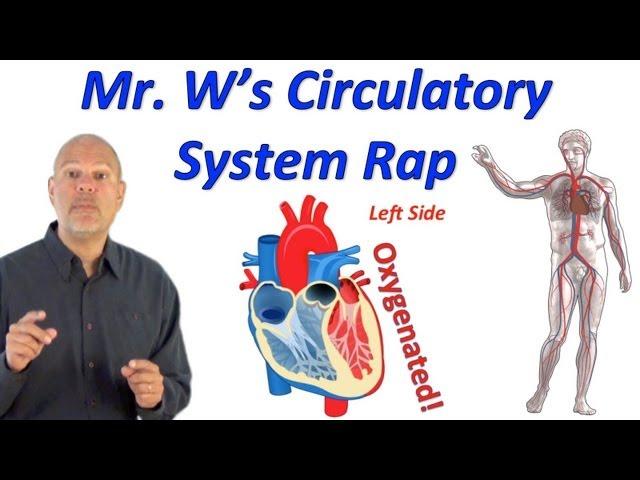Circulatory System Rap (Pump it Up!)