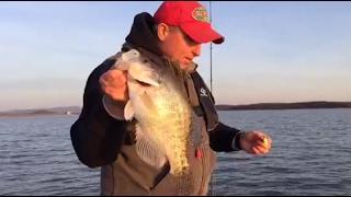 live crappie fishing tips no editing fishing stumps