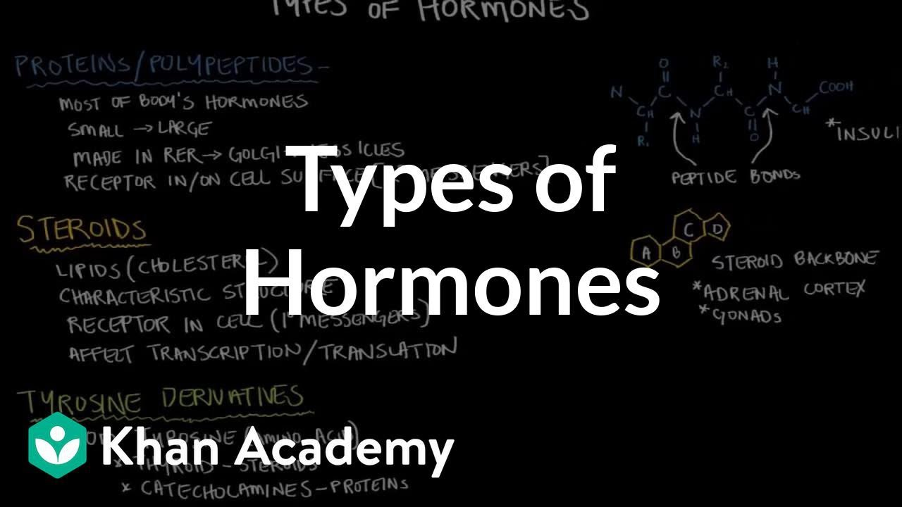 Types Of Hormones Video Endocrine System Khan Academy