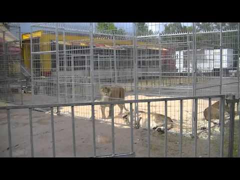 Zoo Du Cirque Pinder Mardi 25 Juin 2013 à Epinal