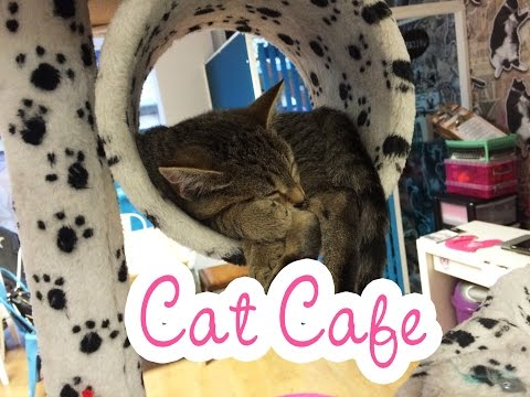 mog-on-the-tyne-cat-cafe-in-newcastle