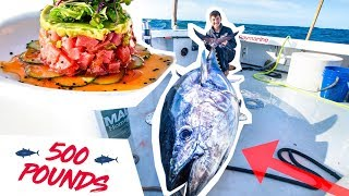 GIANT 500 Pound TUNA Fishing!!! (CATCH CLEAN COOK)