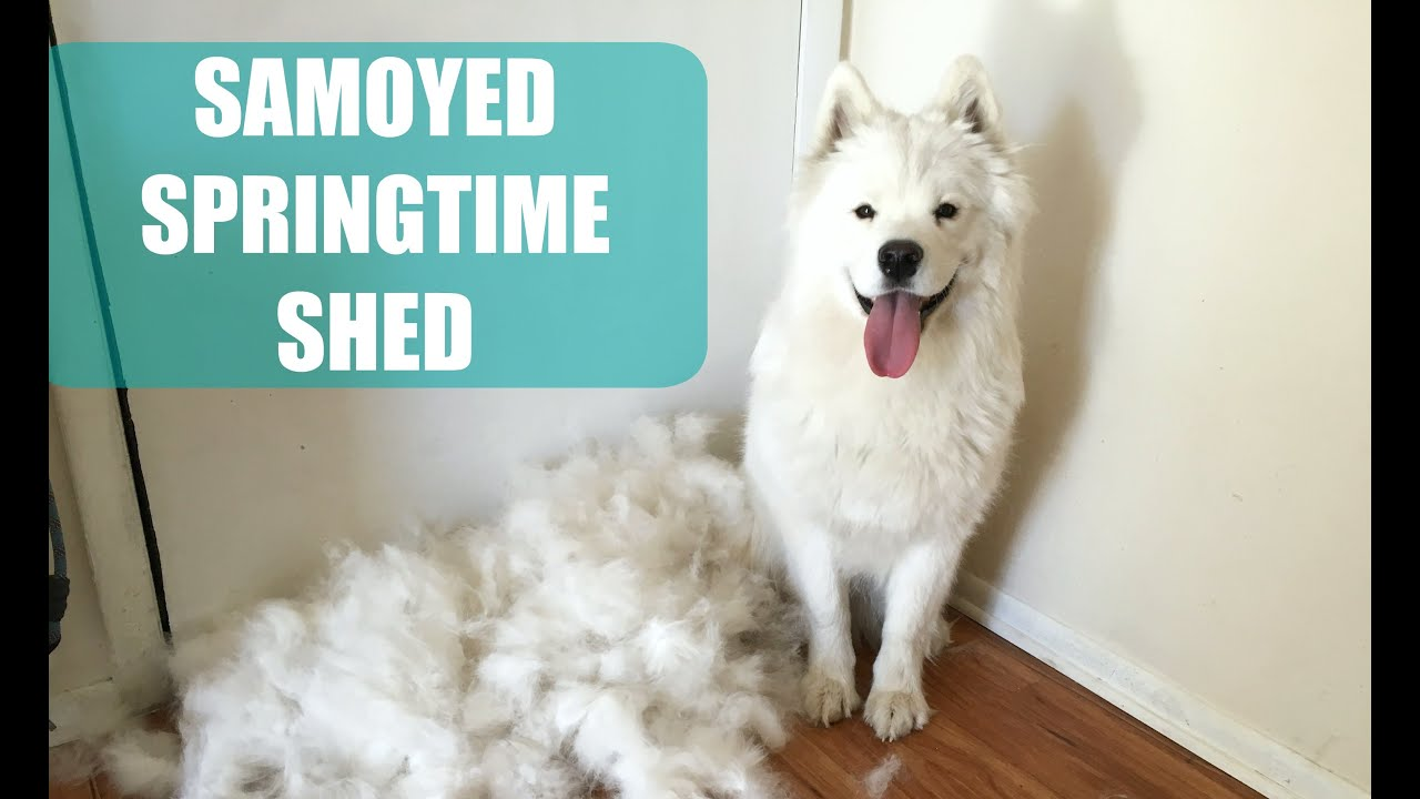 shedding breeds least non and list that dont shed sheds dog best dogs
