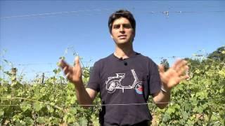 Le vignoble Marmandais par M. Elian Daros et M. Patrick Soubiran