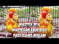 Masteran Lovebird Malam Hari Siang Pagi Cocok Buat Jenis Lovebird Apapun  Mp3 - Mp4 Download