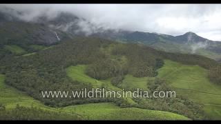 Eravikulam National Park - Neelakurinji and Nilgiri Thar slopes, Anamudi peak, tea gardens: aerials
