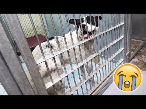 If You Have LOST A DOG... PLEASE WATCH THIS! (Emotional)
