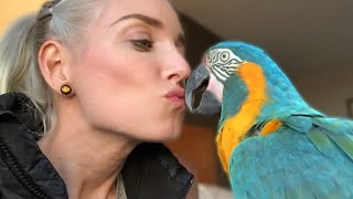 My Macaw Jinx's Adorable KISS!