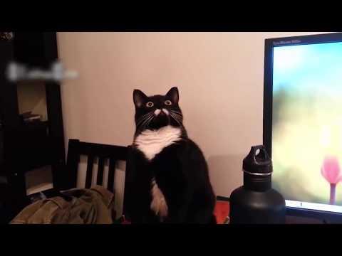 Top 50 Funny Cat Videos - Funny Cats 2018