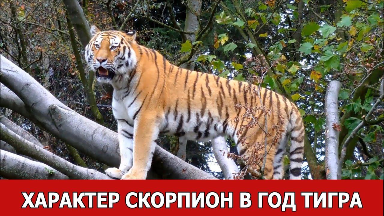 Характер: Скорпион в год Тигра (Скорпион-тигр)