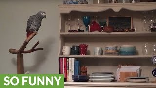 Parrot discovers how to trigger Amazon Alexa