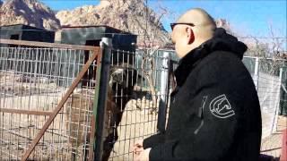 Bonnie Springs Ranch Petting Zoo: December 30, 2013