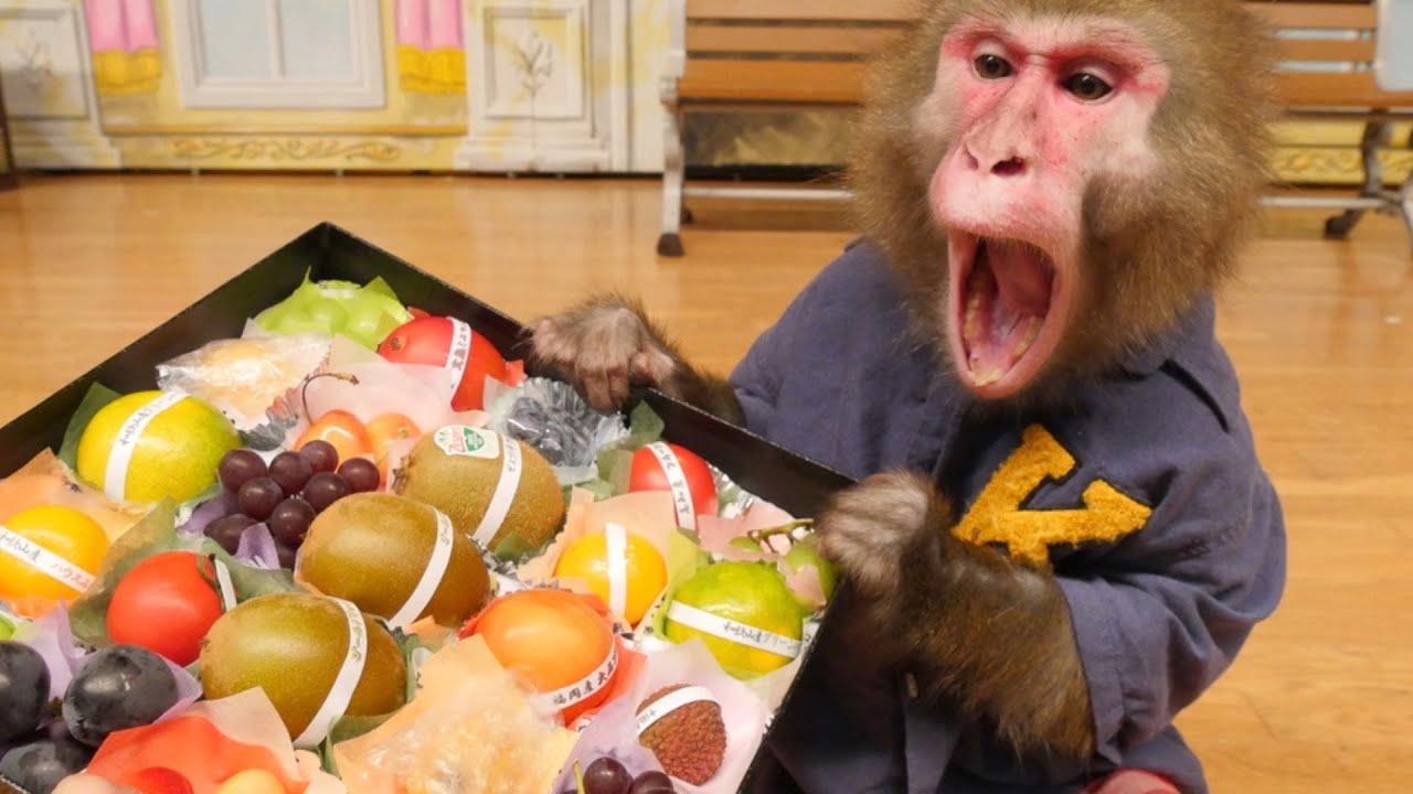 果物の宝石箱にお猿のカイくん超びっくり!