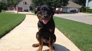 Kodiak - 5 Month Old Rottweiler - Catoosa Dog Training