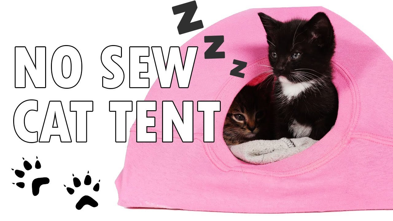 Download DIY Cat Tent from a T-Shirt and a Wire Hanger! | T-shirt.ca