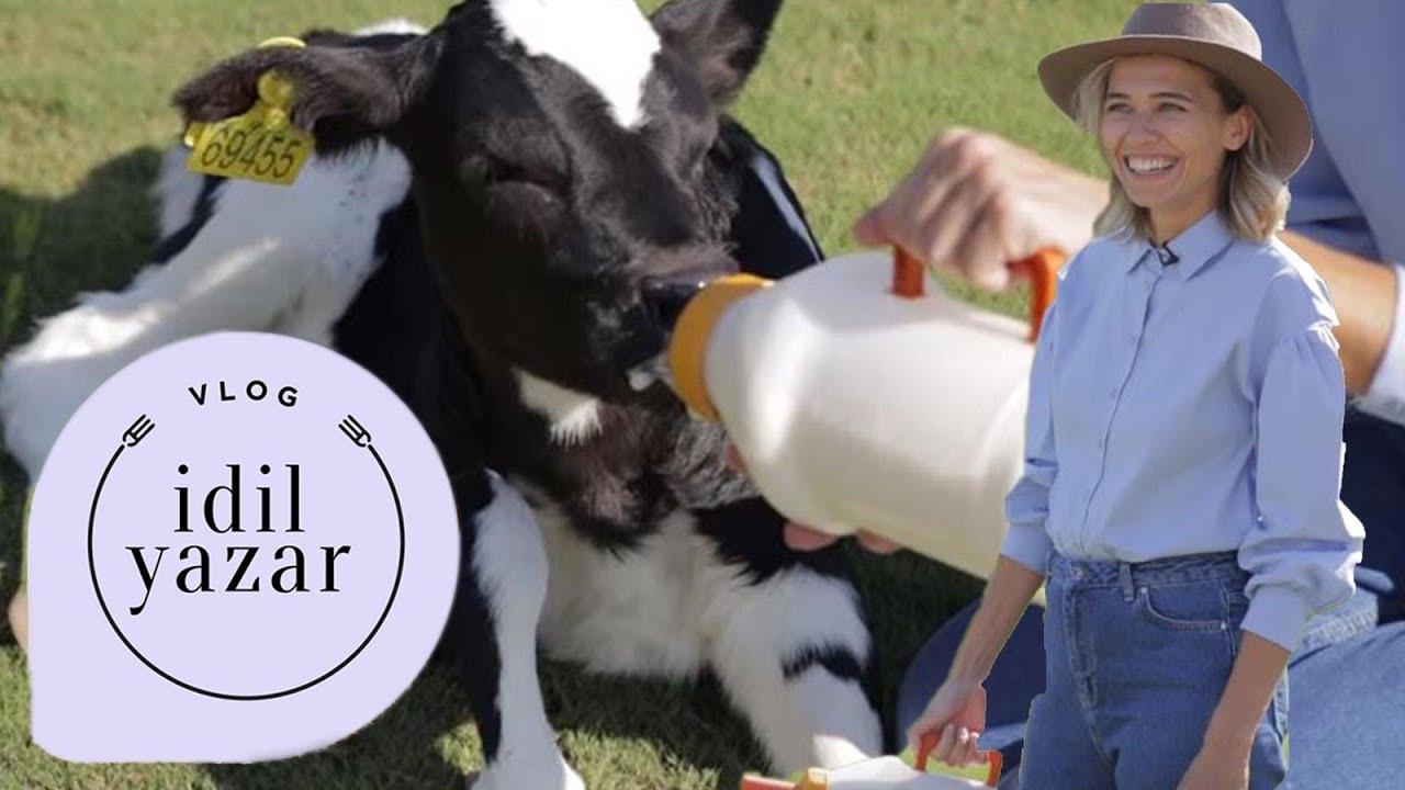 Çiftlikte Bir Gün 🐄 Çiğ Süt Hakkında Bilgiler 🍼 Efeler Çiftliği   VLOG