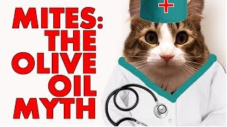 Why you Should Not Use Olive Oil To Treat Cat Ear Mites 2018
