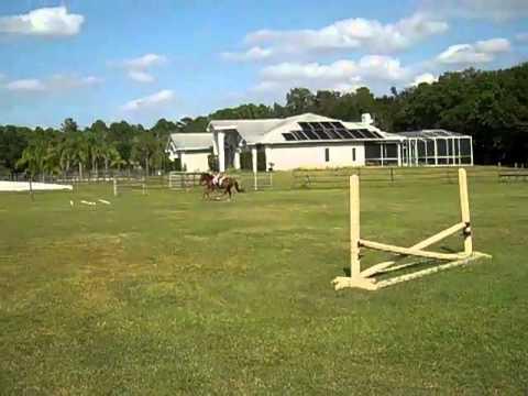 Clanfair Foxfire - more jumping