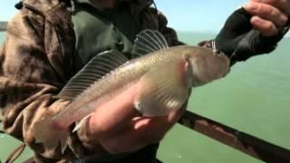 Диалоги о рыбалке. Баку. Кутум.