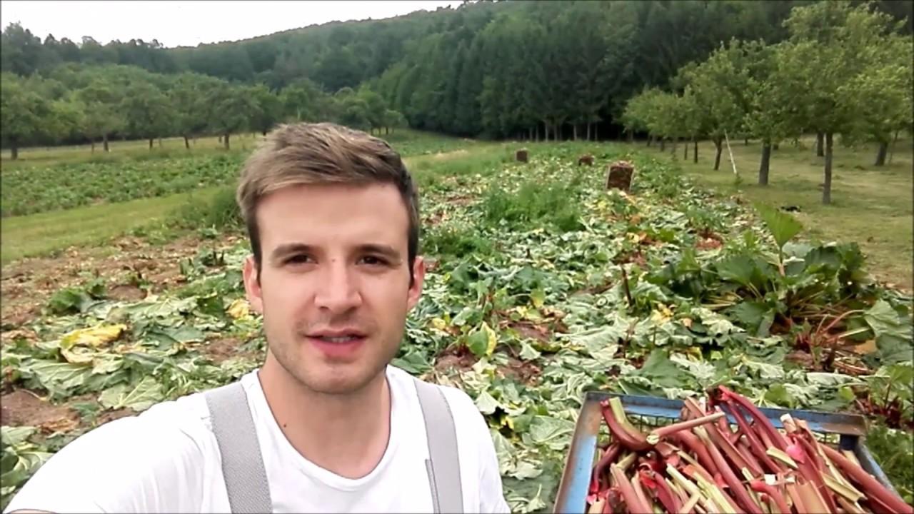 Rhabarber Ernte - YouTube