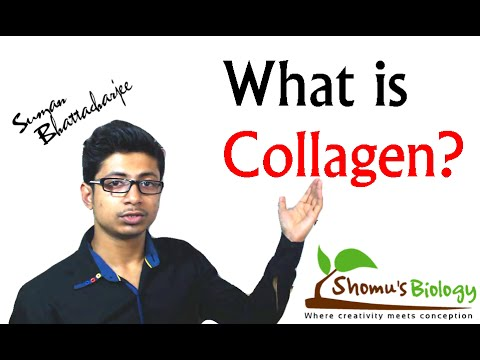 What is collagen (collagen protein structure and function)