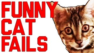 Cats Being Jerks Video Compilation    FailArmy