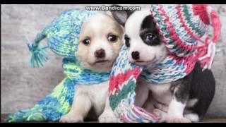 милые картинки собаки