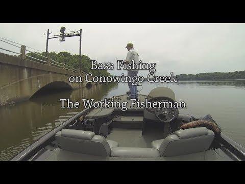 Bass Fishing on Conowingo Creek