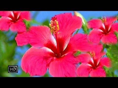 Phulwa Arhulwa Ke | फुलवा अरहुलवा के | Bhojpuri Devi Geet
