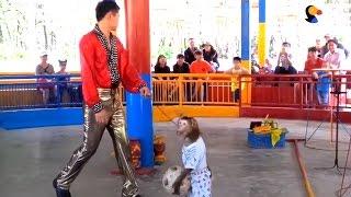 Monkey Island: The Saddest Show On Earth | The Dodo