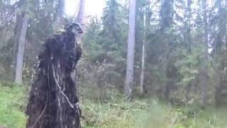 Бродилки по влажному Тосненскому лесу. Август 2016