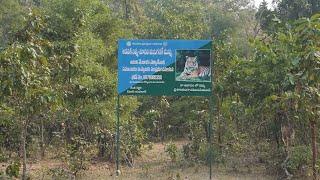 Telangana's Kagaznagar Tiger Corridor becomes hotbed of man-animal conflict