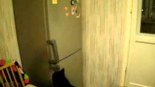 кот мейн кун ворует магнитики с холодильника
