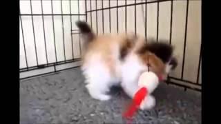 Видео танцующих кошек №1