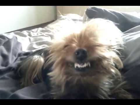 Can Dogs Laugh | Can Dogs Smile