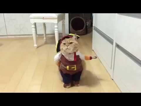 Ржачный кот - пират